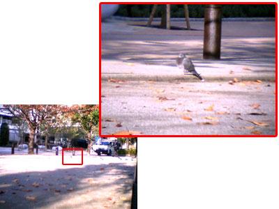 7x optical zoom